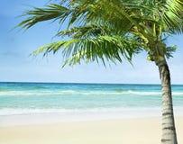 Plaża z palmą obraz stock