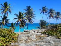 Plaża z skałami i palma w Barbados obraz stock