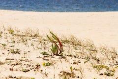 Plaże i falezy zdjęcie stock
