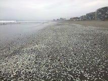 Plaże na wybrzeże pacyfiku Zdjęcie Stock