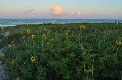 Plażowa ścieżka ciie w białą piasek diunę brzeg Obrazy Stock