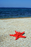 plażowa czerwona denna gwiazda Zdjęcia Royalty Free