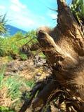 Plażowa Drzewna fotografia obrazy stock