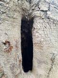 Plażowa drzewna północna Karolina dziura obrazy royalty free