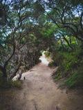 Plażowa lasowa ścieżka obraz stock