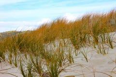 Plażowa naturalna roślinność Zdjęcia Stock
