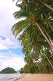 plażowa palma fotografia royalty free