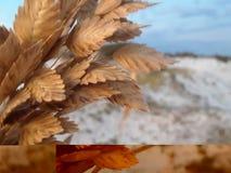 Plażowa roślina obrazy royalty free
