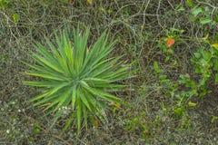 Plażowa roślina Obrazy Stock