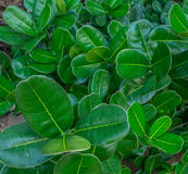 Plażowa roślinność Zdjęcia Royalty Free