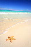 plażowa rozgwiazda obraz royalty free