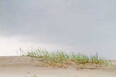 Plażowa trawa na młodej diunie Zdjęcie Stock