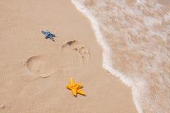 plażowe składów piaska skorupy Obrazy Royalty Free
