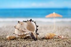plażowe skorupy Fotografia Stock