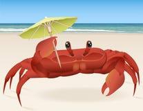plażowego czarny kraba denny brzeg Obraz Royalty Free