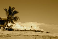 plażowego komba nosaty sepia obraz stock