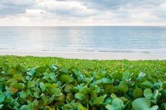 Plażowego ranku chwała na białej piasek plaży Zdjęcia Stock