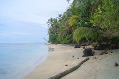 Plażowego widoku Tropikalna Wyłączna inspiracja - cahuita park - zdjęcie royalty free