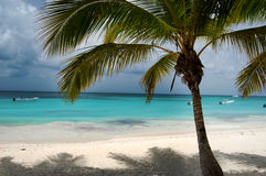 Plażowi łóżka pod kokosową palmą z widok na ocean Zdjęcie Royalty Free