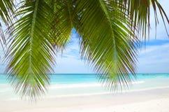plażowi Caribbean zdjęcia royalty free
