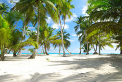 plażowi Caribbean Obraz Stock
