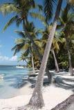 plażowi drzewka palmowe Zdjęcie Royalty Free
