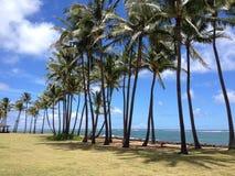 Plażowi drzewka palmowe Zdjęcie Stock