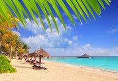 plażowi karaibscy majscy palmowi Riviera sunroof drzewa Obrazy Royalty Free