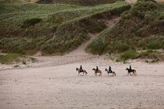 plażowi konie Fotografia Royalty Free