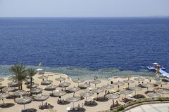 Plażowi parasole z loungers na piaskowatej plaży Czerwony morze Fotografia Royalty Free