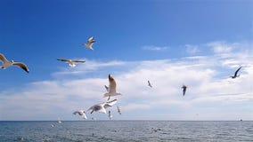 plażowi ptaki zdjęcie wideo