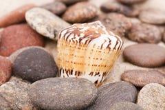plażowi składy sand skorupy Obrazy Royalty Free