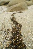 plażowi szczegóły Fotografia Stock