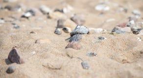 plażowi teraźniejsi kamienie obrazy royalty free