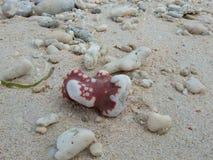 plażowi teraźniejsi kamienie Zdjęcie Royalty Free