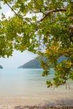 Plażowy życie obrazy royalty free