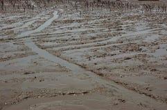 plażowy błoto Zdjęcia Royalty Free
