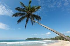 plażowy idylliczny lanka palmy sri zdjęcie royalty free
