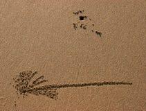 plażowy kraba ścieżki piasek Fotografia Stock