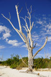 plażowy nieżywy drzewny dziki Zdjęcia Stock