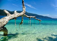 plażowy nieżywy drzewo Zdjęcia Stock