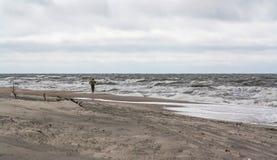 plażowy osamotniony mężczyzna Złocisty zgromadzenie, pogoda sztormowa Zdjęcie Royalty Free