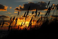plażowy owsów morza wschód słońca Zdjęcia Royalty Free