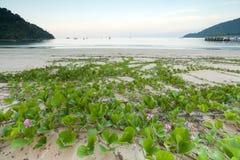 plażowy półmrok zdjęcie stock
