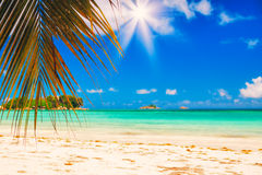 plażowy palmowy tropikalny Liście drzewka palmowe w słońca świetle Naturalny tło dla Wakacyjnej podróży karty stonowany Obrazy Stock