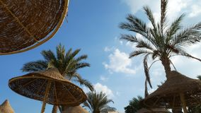 Plażowy parasol i drzewko palmowe przedstawiający w odbiciu okulary przeciwsłoneczni zbiory