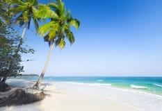 plażowy piękny kokosowej palmy morze Zdjęcie Royalty Free