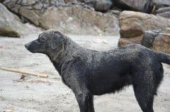 plażowy pies Obrazy Stock