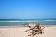 Plażowy przegapiający morze z drzewem fotografia stock