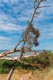 Plażowy przegapiający morze z drzewem i niebieskim niebem obrazy stock